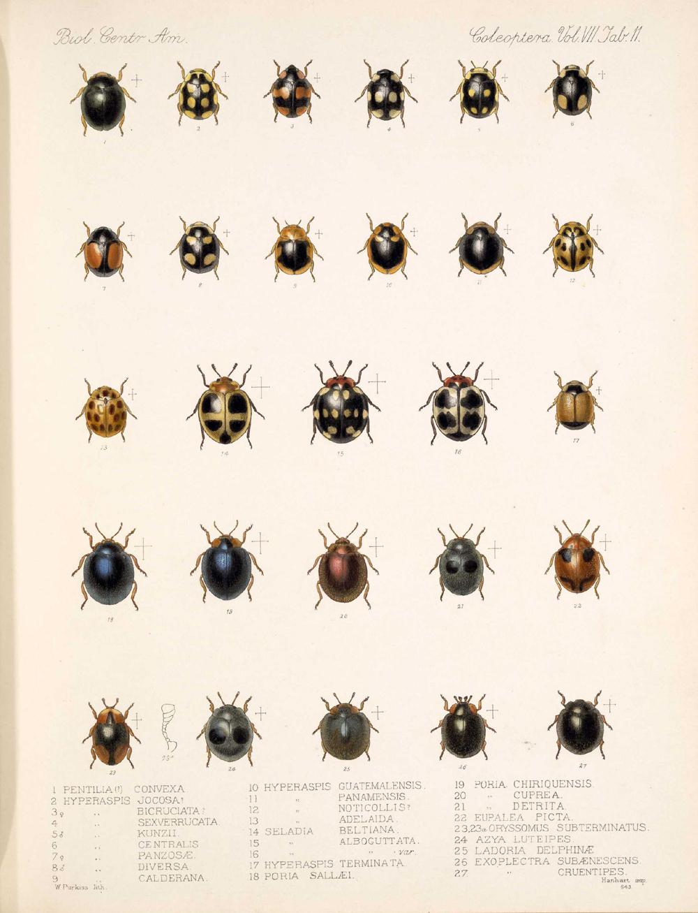 Beetles,  Image number:bca_12_07_00_306