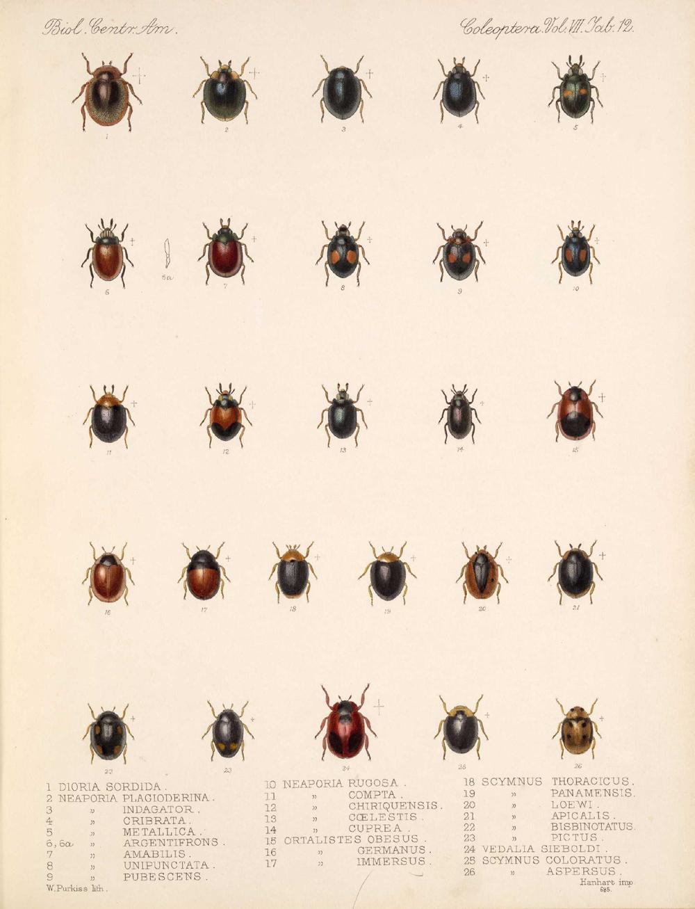 Beetles,  Image number:bca_12_07_00_307