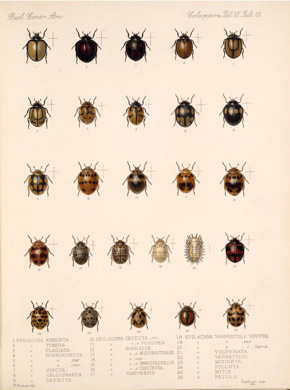 Beetles,  Image number:bca_12_07_00_308