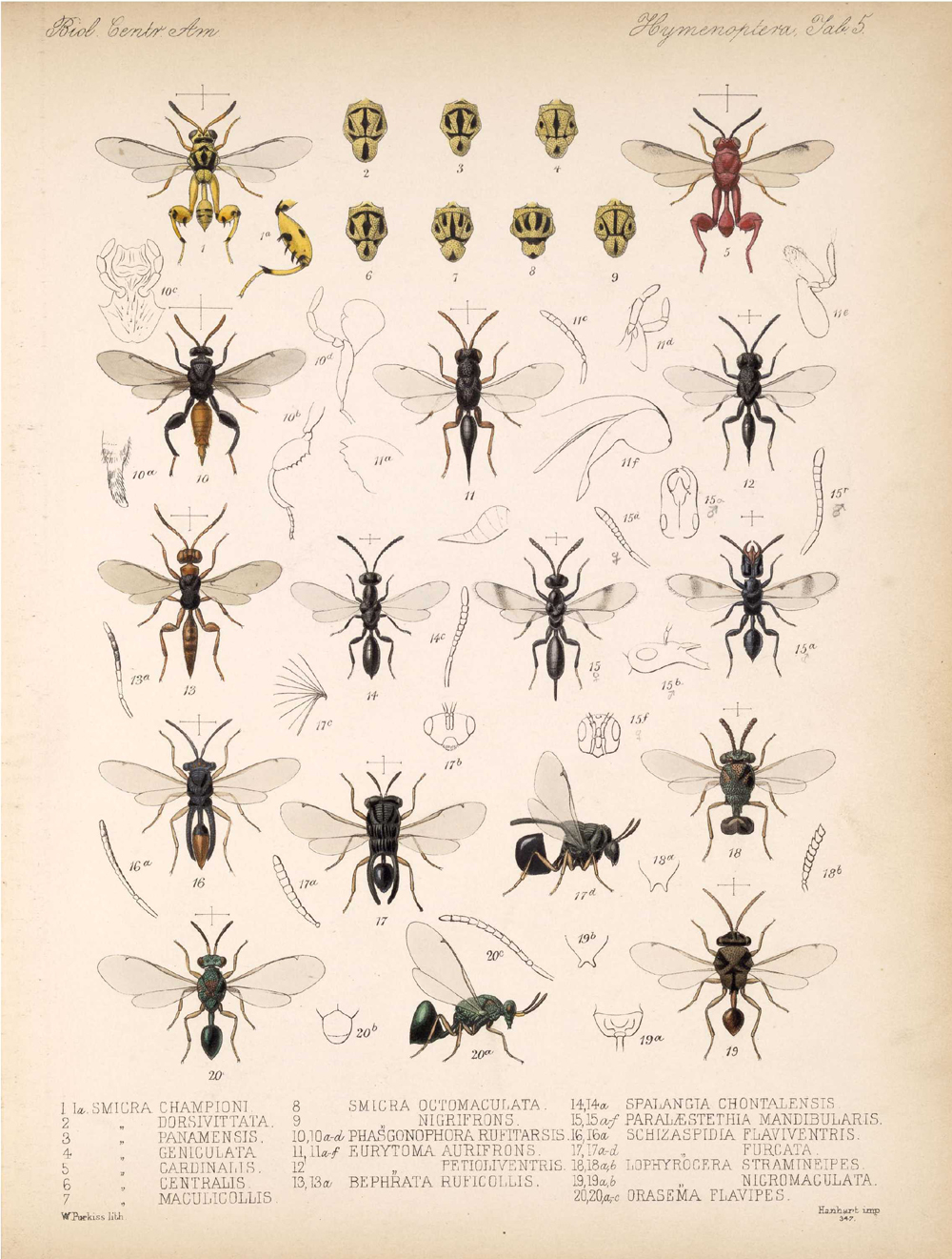 Other Insects,  Image number:bca_13_01_00_513