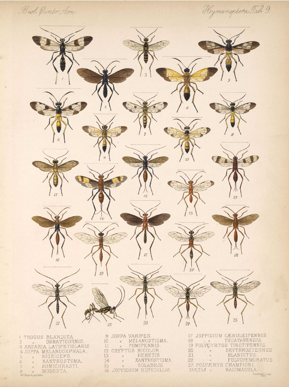 Other Insects,  Image number:bca_13_01_00_517