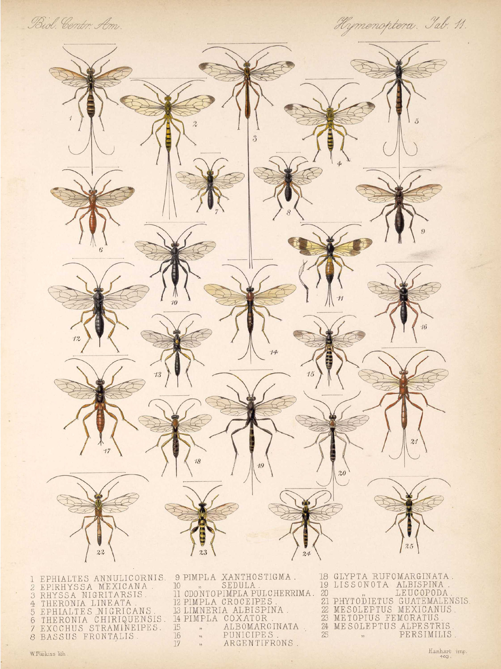 Other Insects,  Image number:bca_13_01_00_519