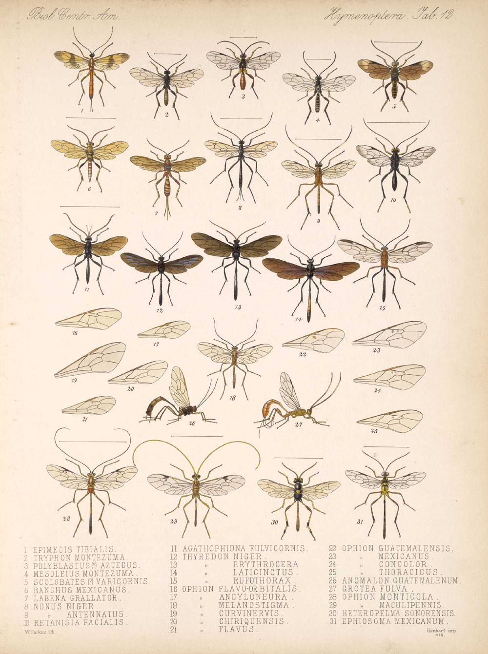 Other Insects,  Image number:bca_13_01_00_520