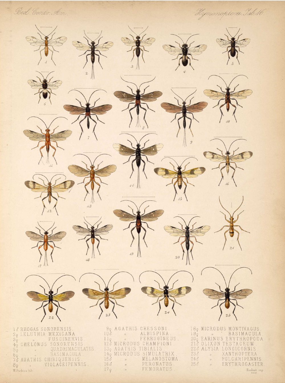 Other Insects,  Image number:bca_13_01_00_524