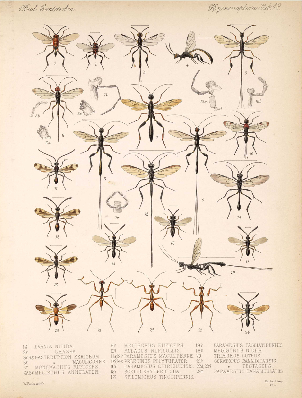 Other Insects,  Image number:bca_13_01_00_526