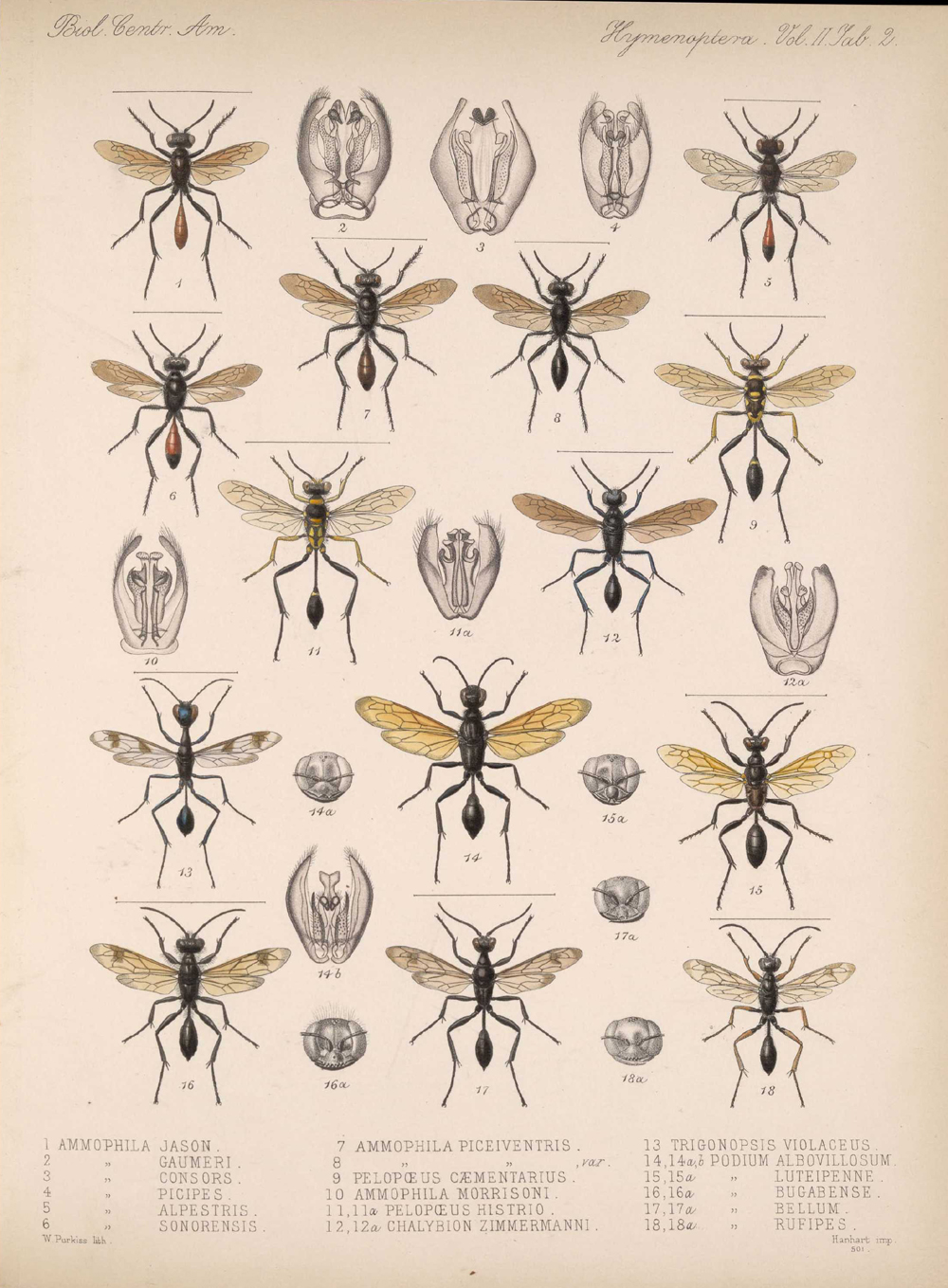 Other Insects,  Image number:bca_13_02_00_440