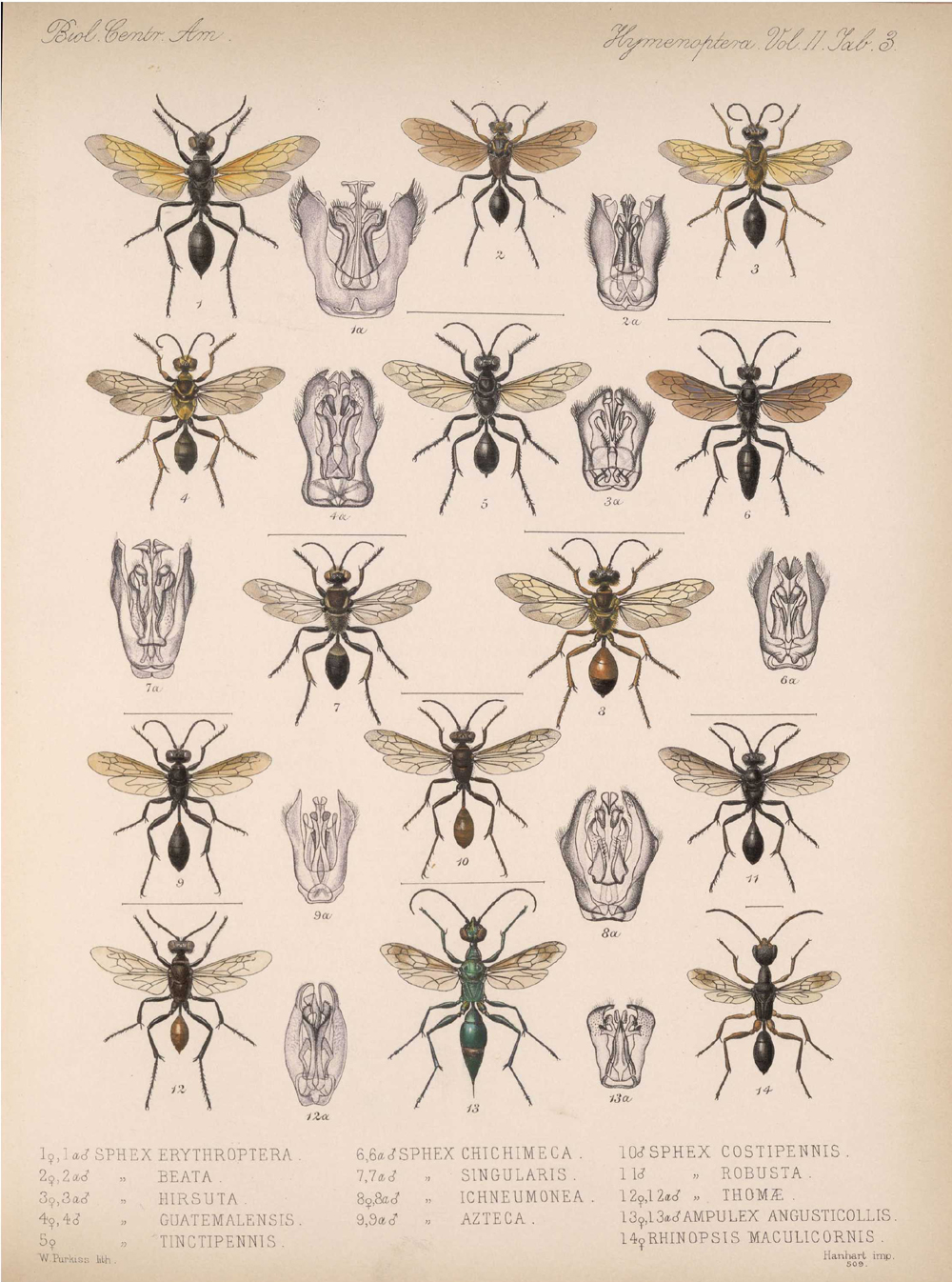 Other Insects,  Image number:bca_13_02_00_441