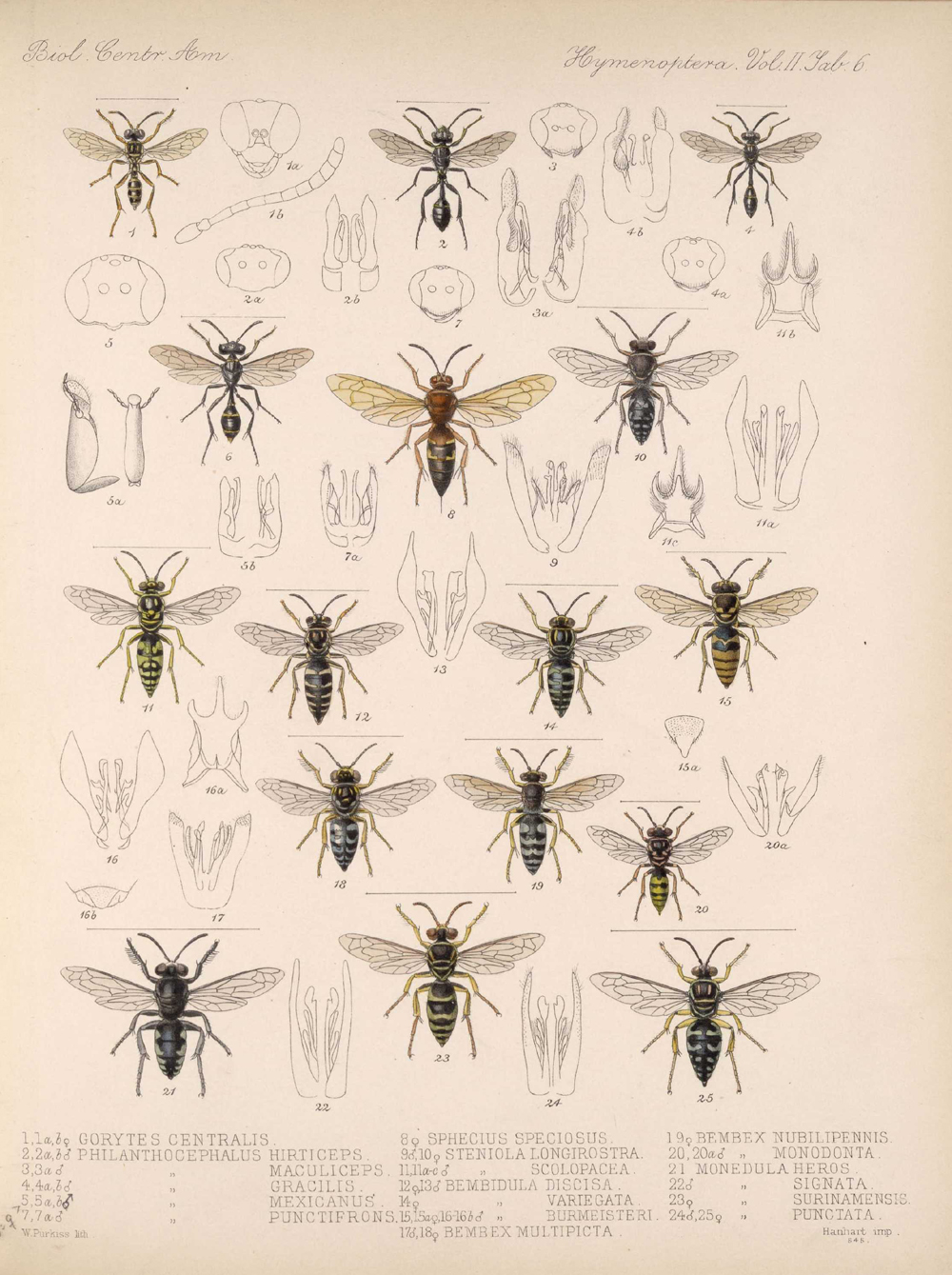 Other Insects,  Image number:bca_13_02_00_444