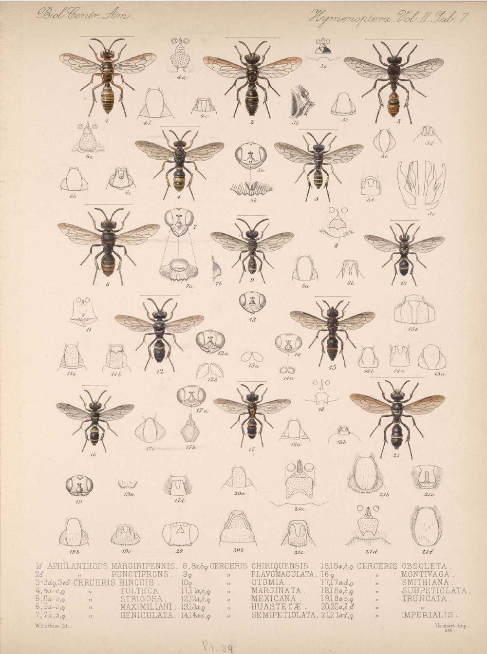 Other Insects,  Image number:bca_13_02_00_445