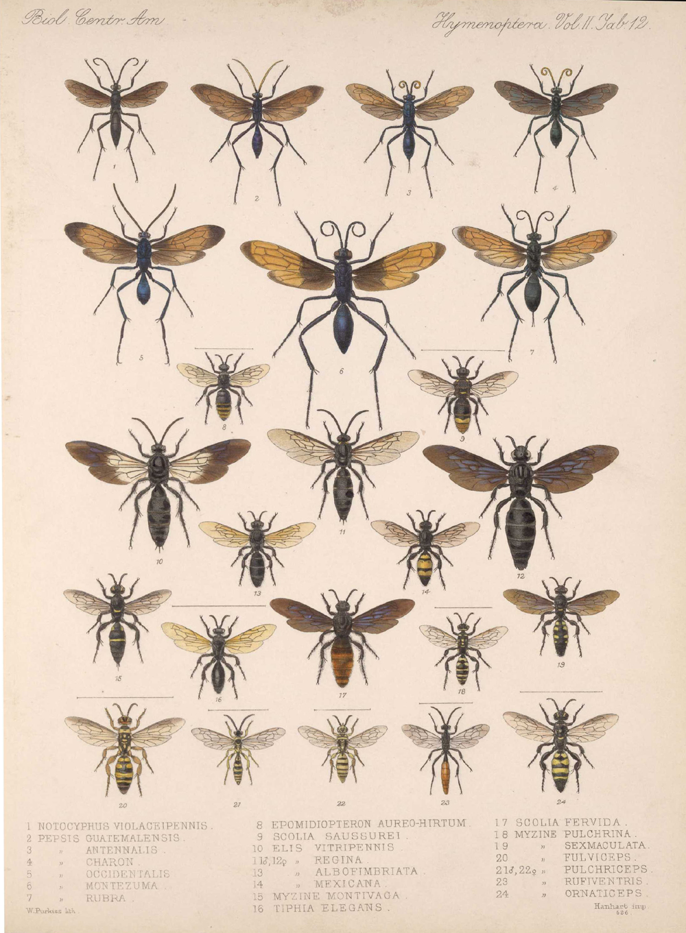 Other Insects,  Image number:bca_13_02_00_450