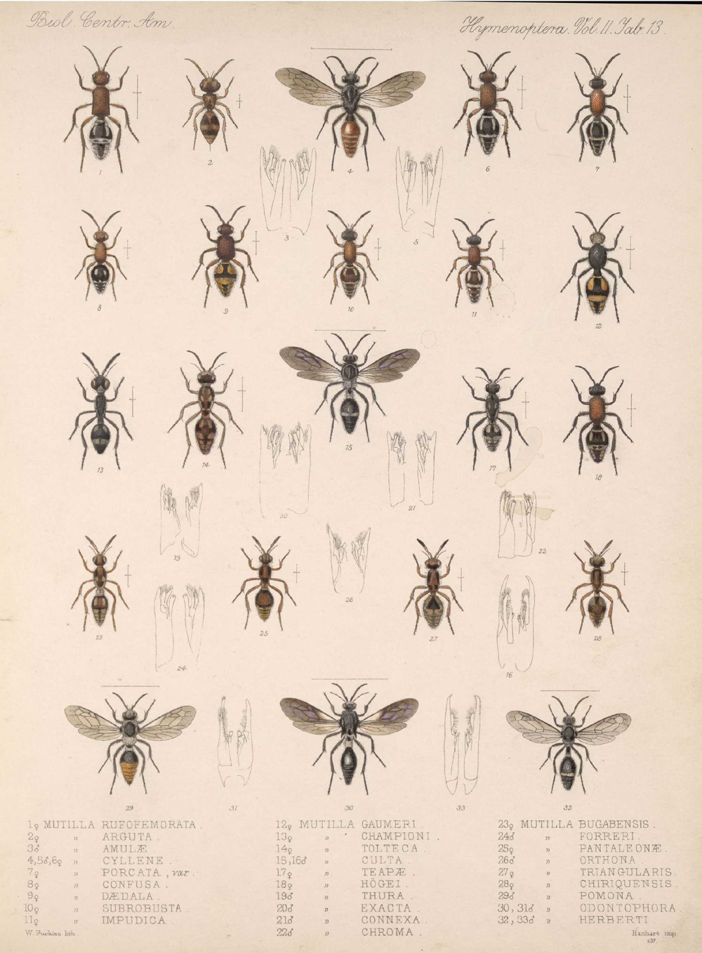 Other Insects,  Image number:bca_13_02_00_451