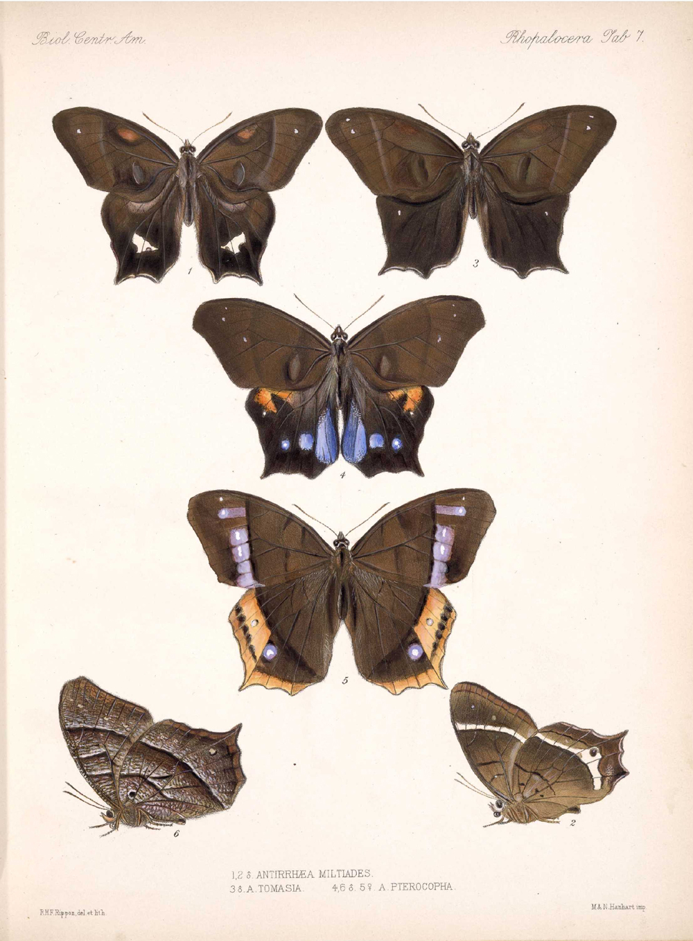 Butterflies and Moths,  Image number:bca_14_03_00_017