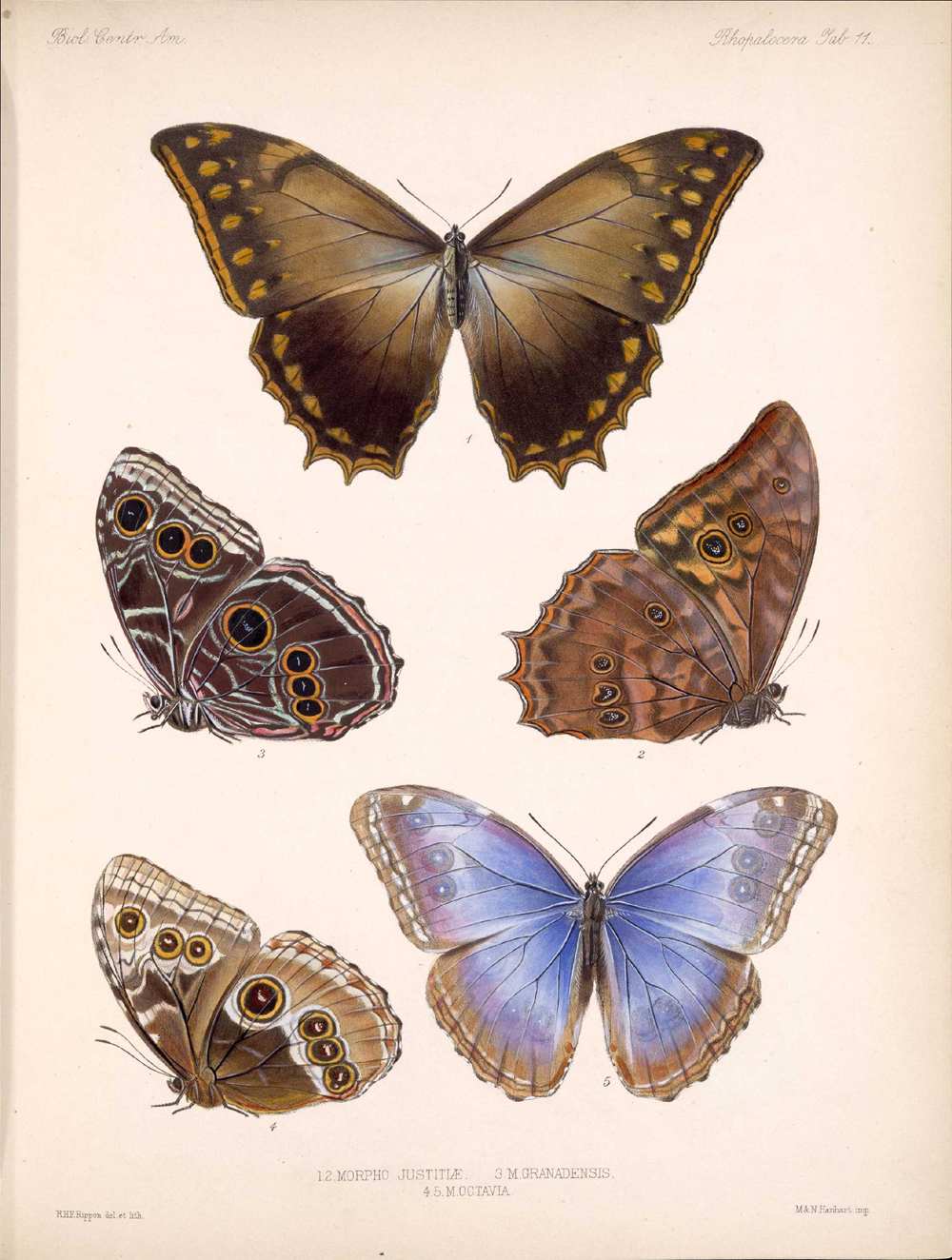 Butterflies and Moths,  Image number:bca_14_03_00_021