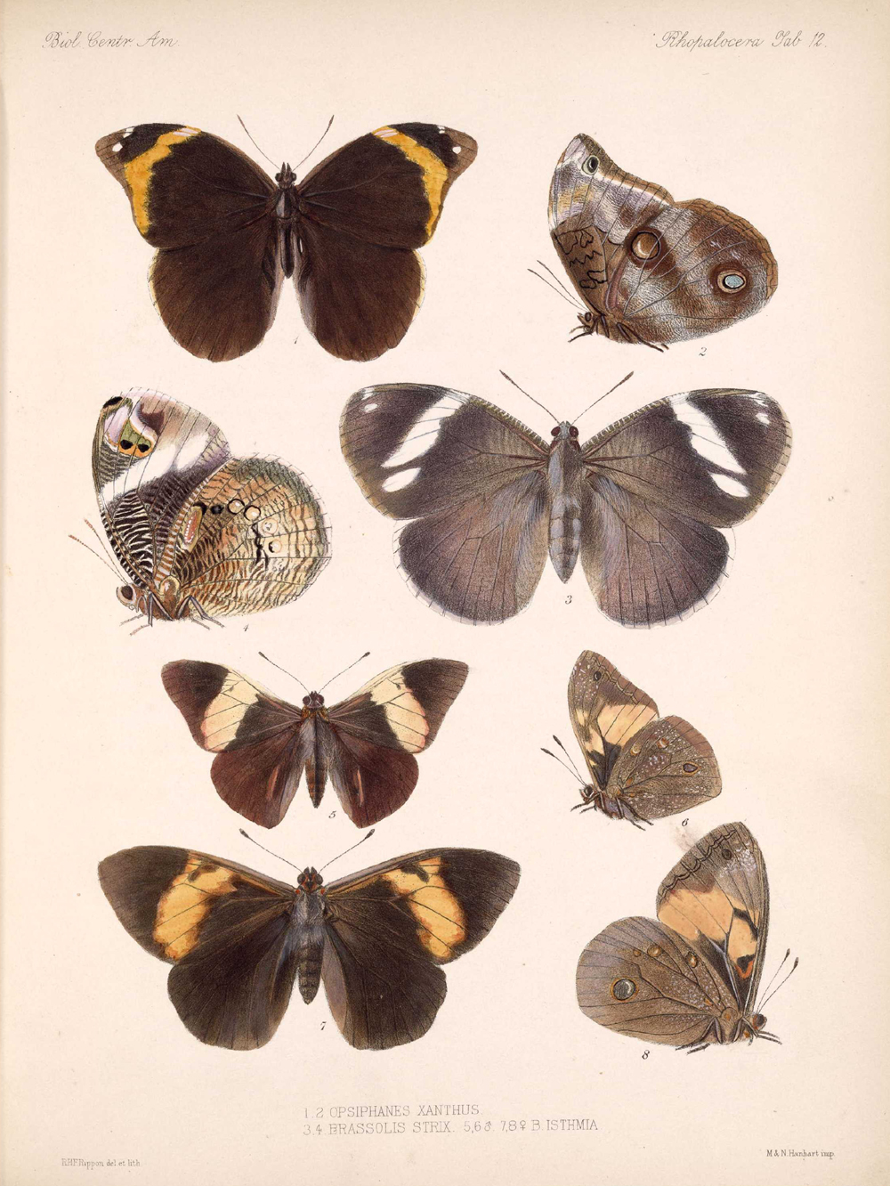 Butterflies and Moths,  Image number:bca_14_03_00_022