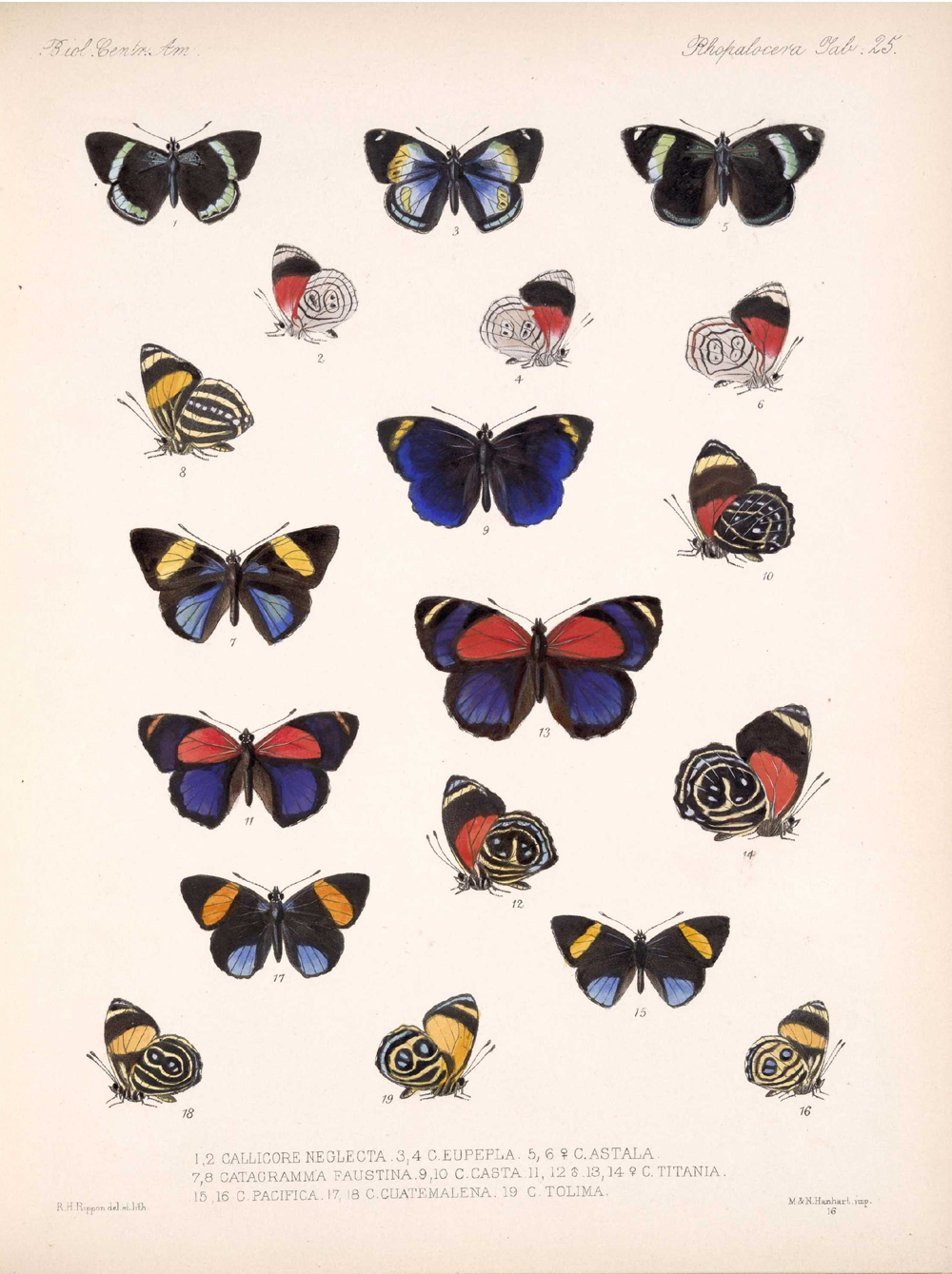 Butterflies and Moths,  Image number:bca_14_03_00_036