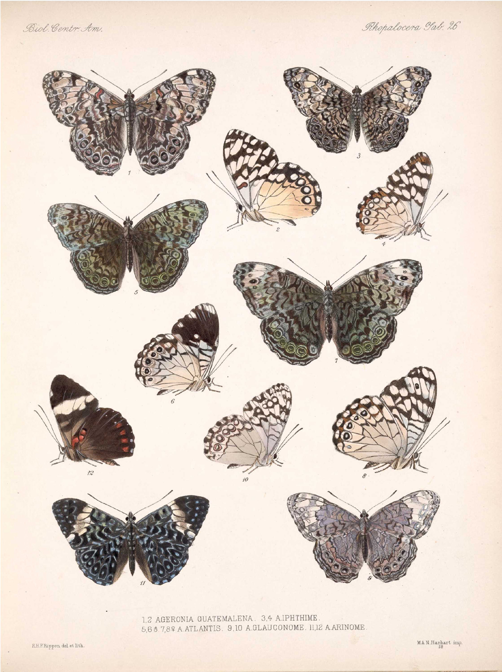 Butterflies and Moths,  Image number:bca_14_03_00_037