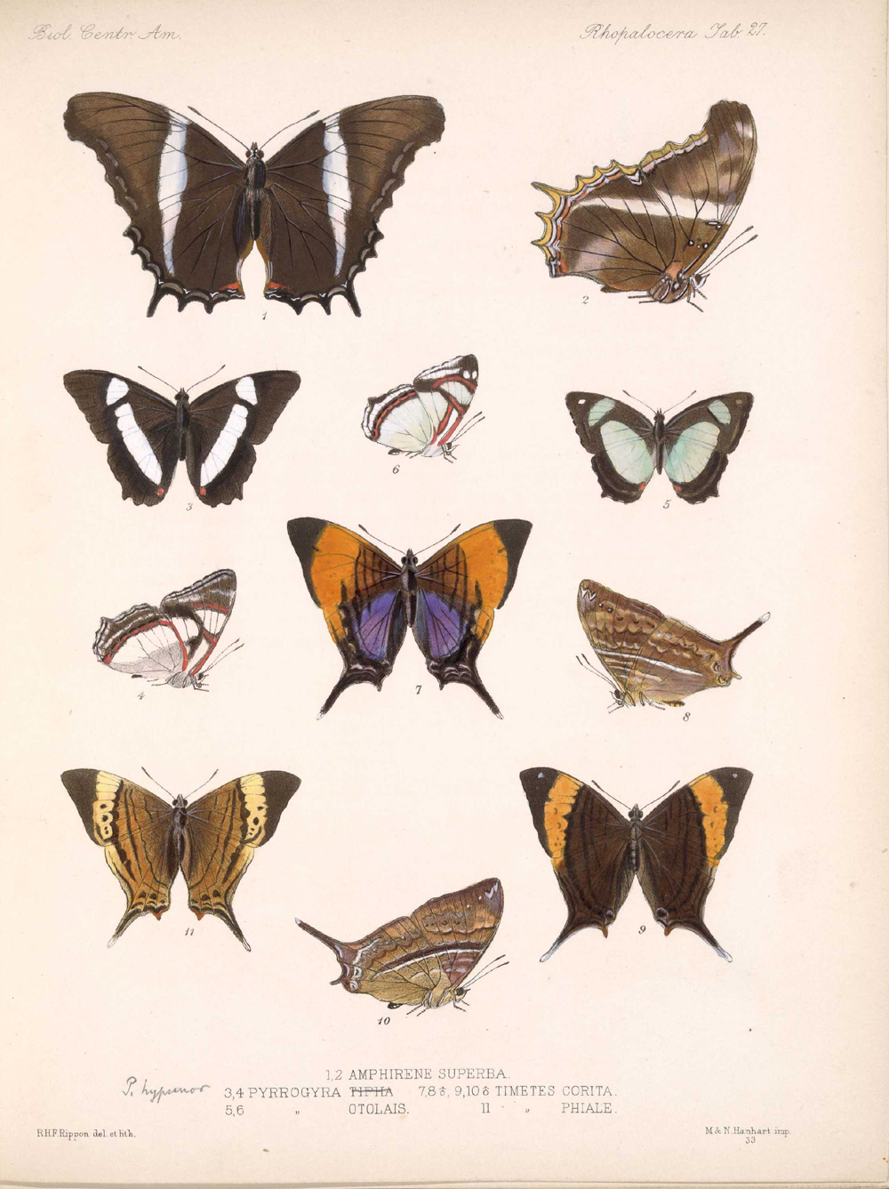 Butterflies and Moths,  Image number:bca_14_03_00_038