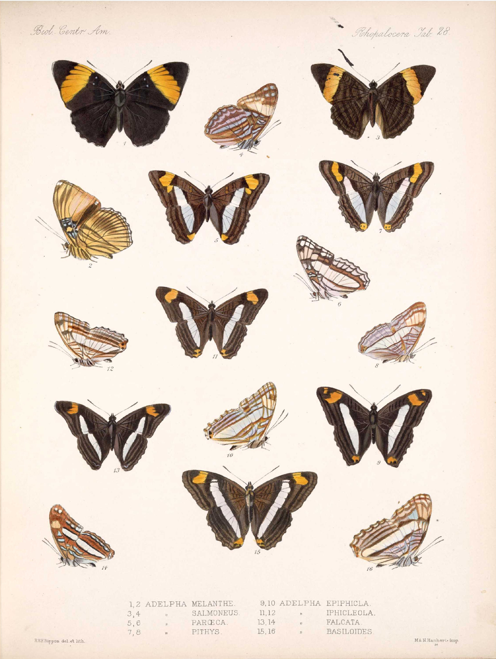 Butterflies and Moths,  Image number:bca_14_03_00_039