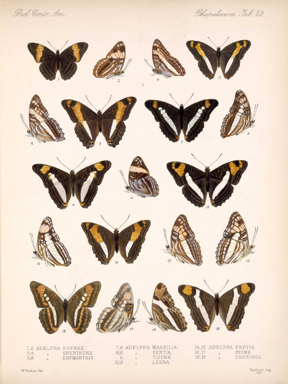 Butterflies and Moths,  Image number:bca_14_03_00_040