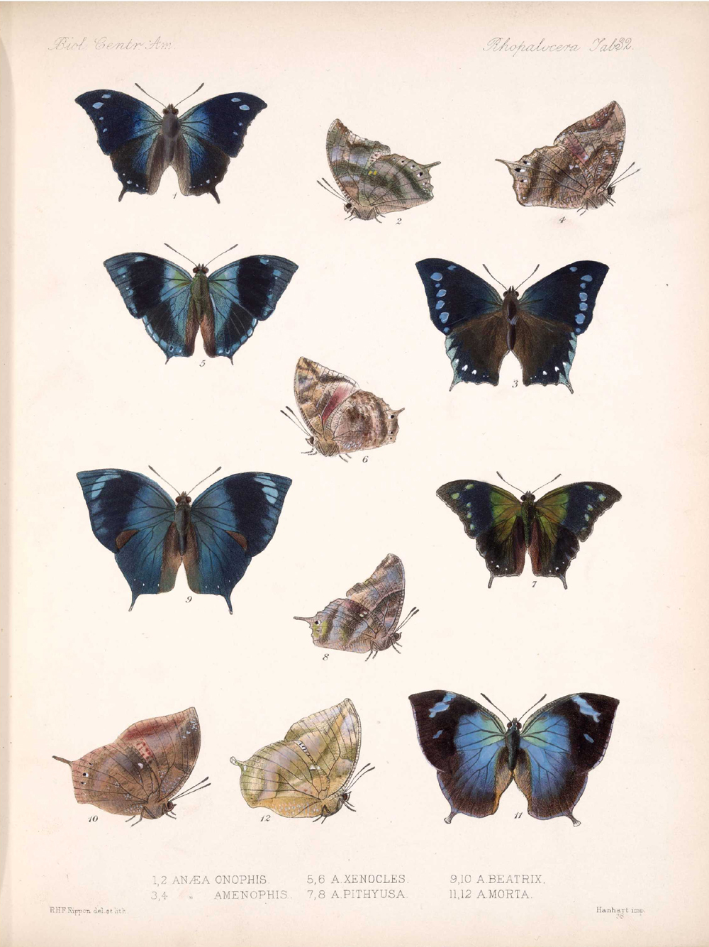Butterflies and Moths,  Image number:bca_14_03_00_043