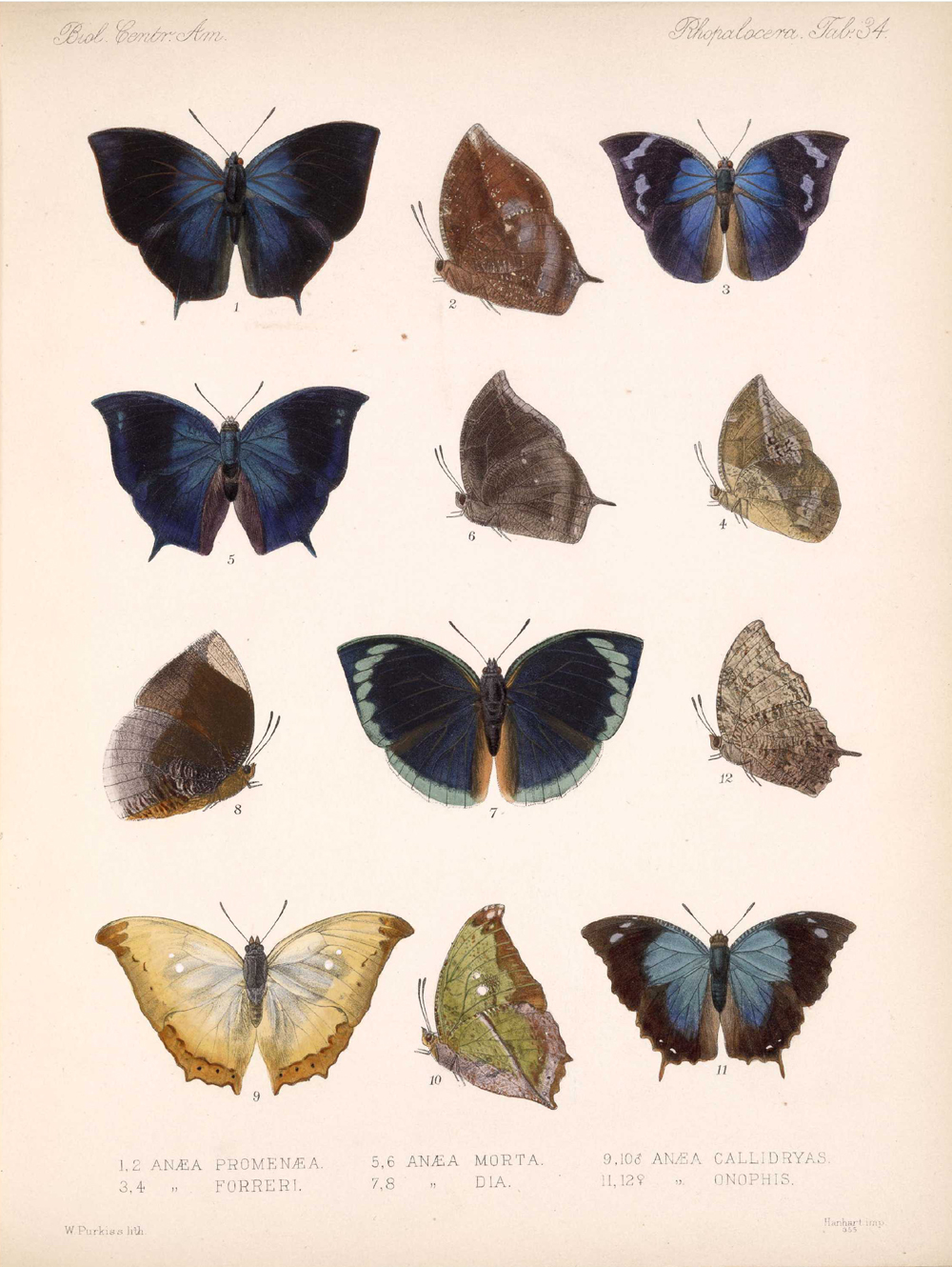 Butterflies and Moths,  Image number:bca_14_03_00_045