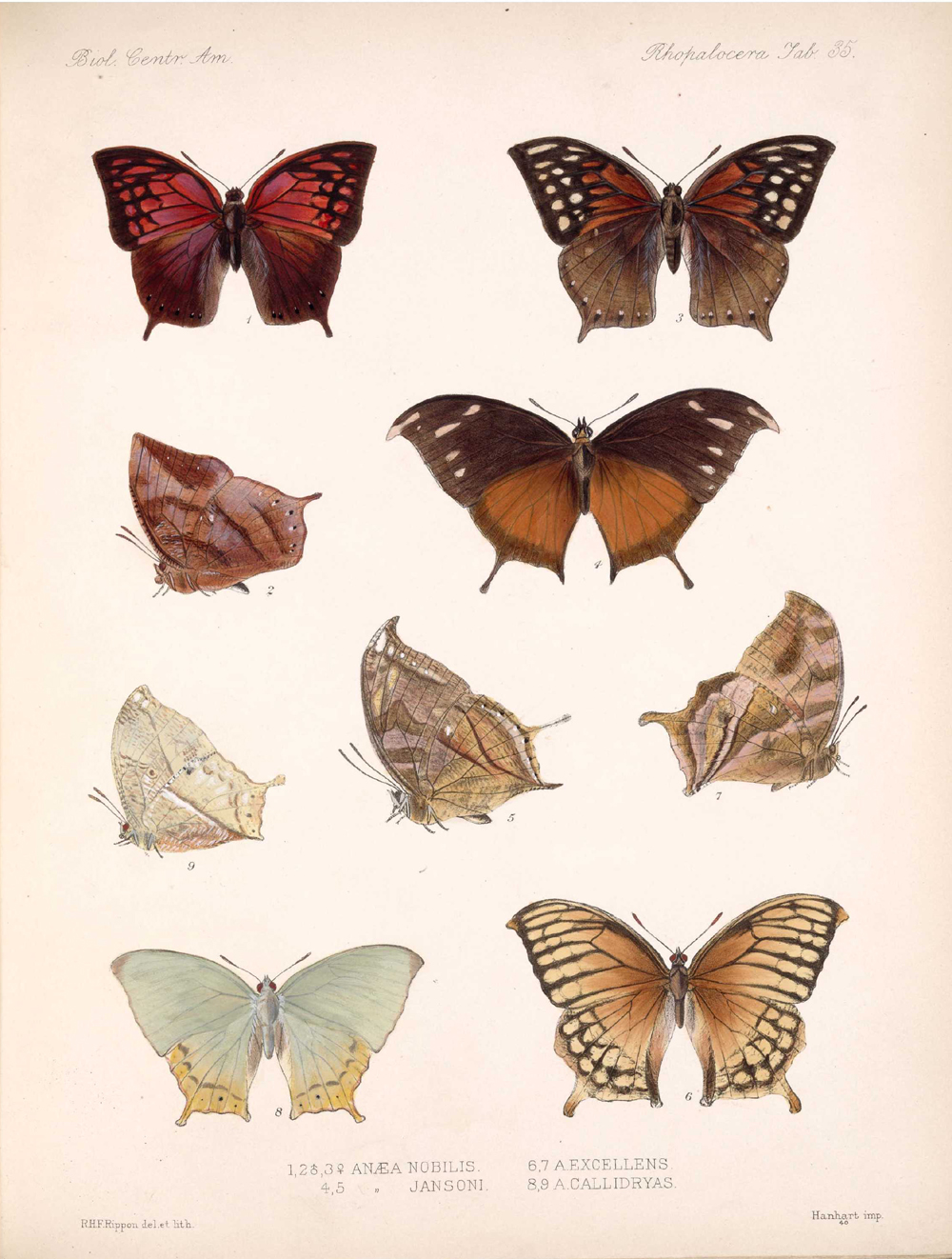 Butterflies and Moths,  Image number:bca_14_03_00_046
