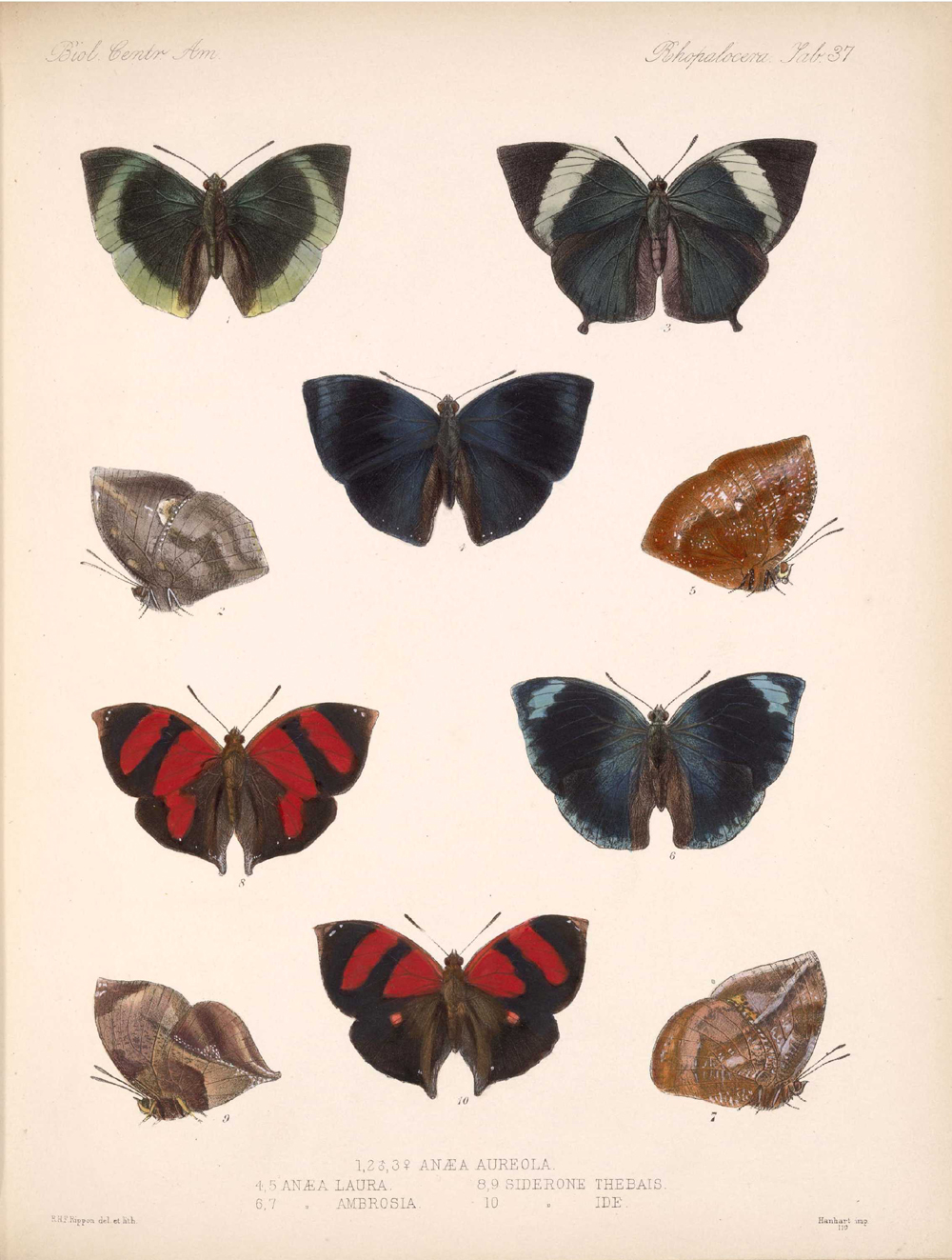 Butterflies and Moths,  Image number:bca_14_03_00_048