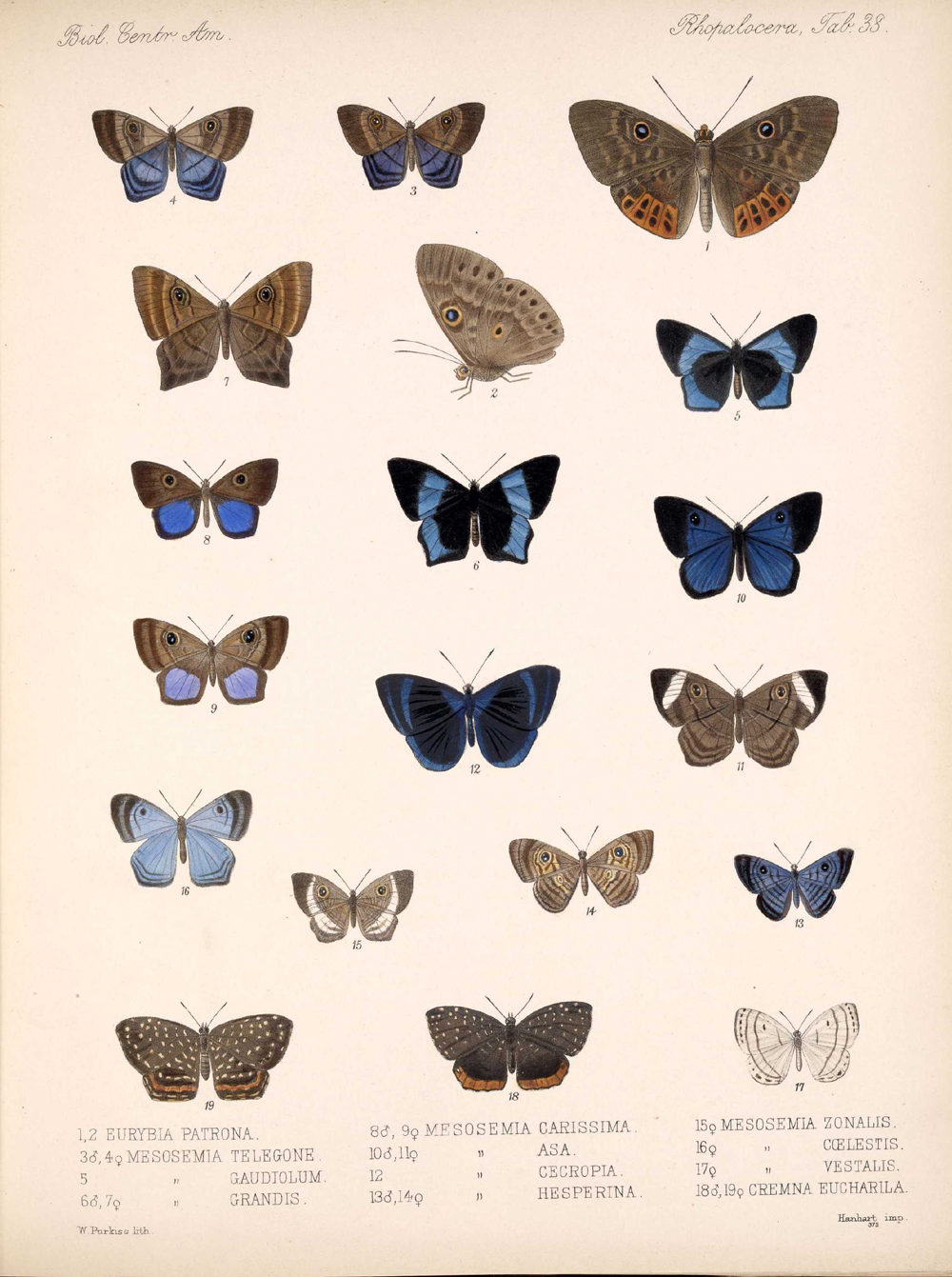 Butterflies and Moths,  Image number:bca_14_03_00_049