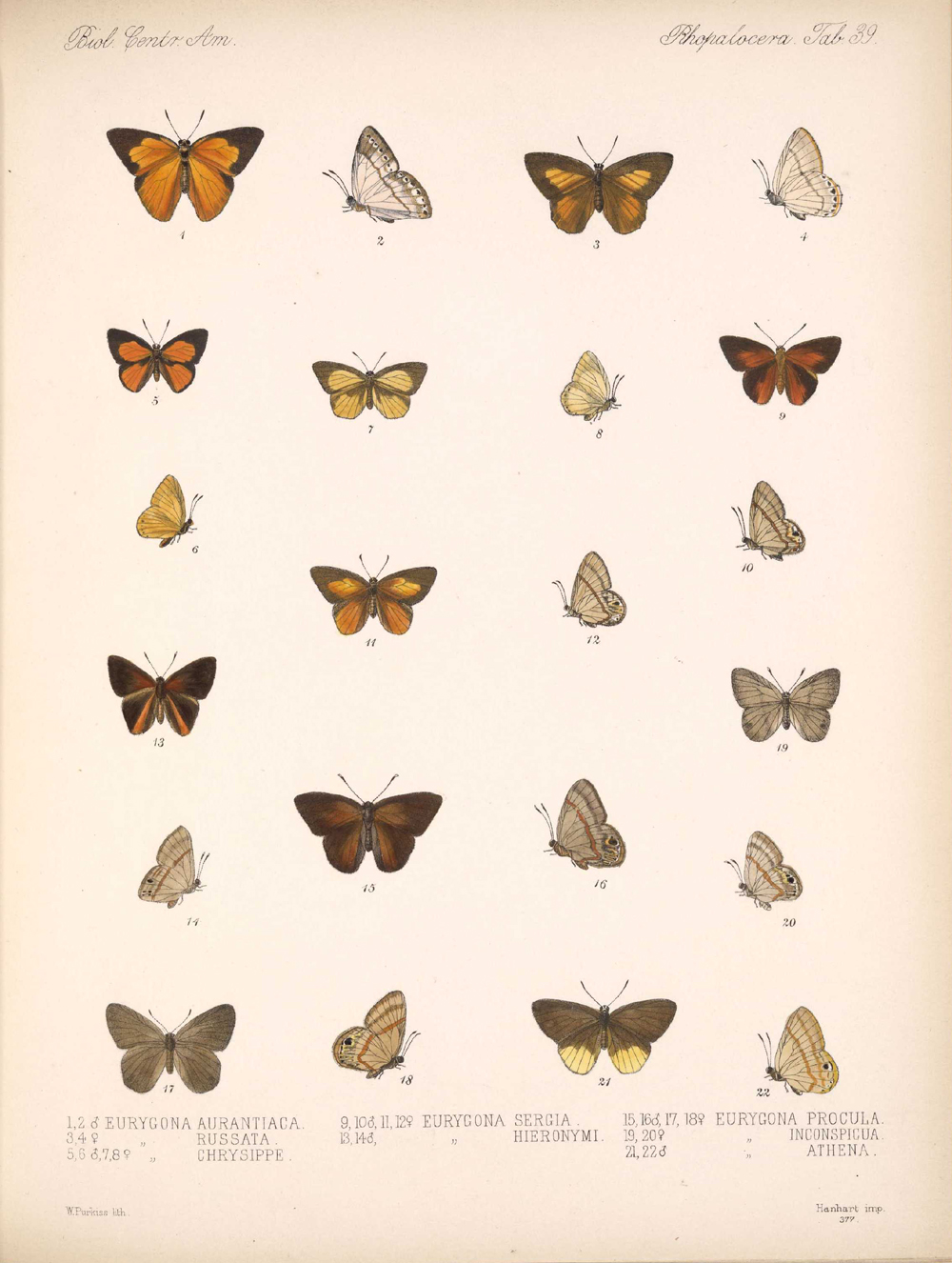 Butterflies and Moths,  Image number:bca_14_03_00_050