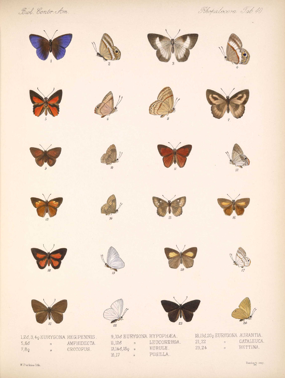 Butterflies and Moths,  Image number:bca_14_03_00_051