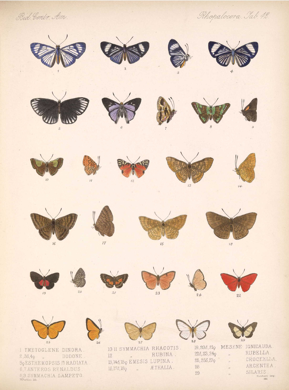 Butterflies and Moths,  Image number:bca_14_03_00_053