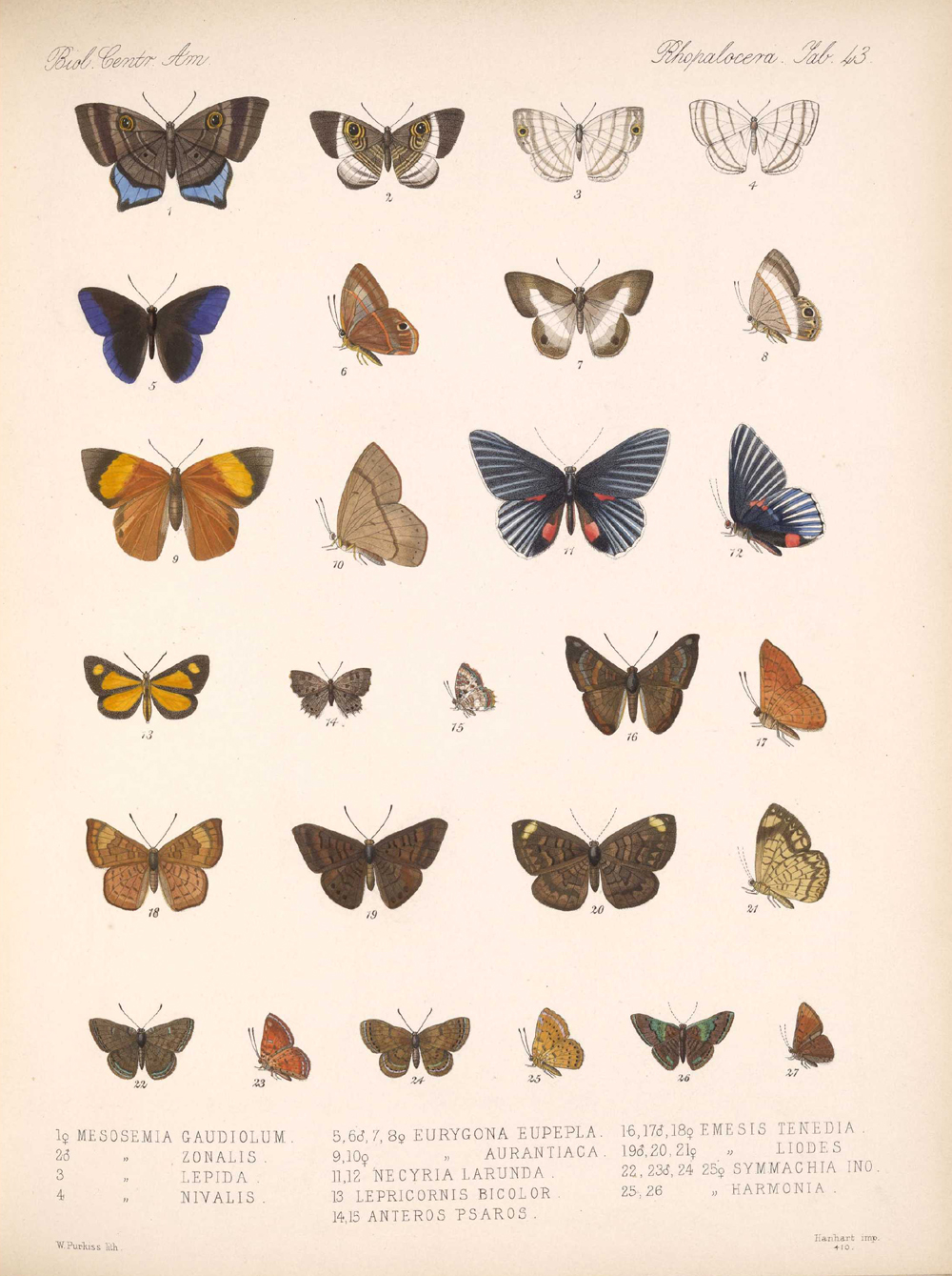 Butterflies and Moths,  Image number:bca_14_03_00_054