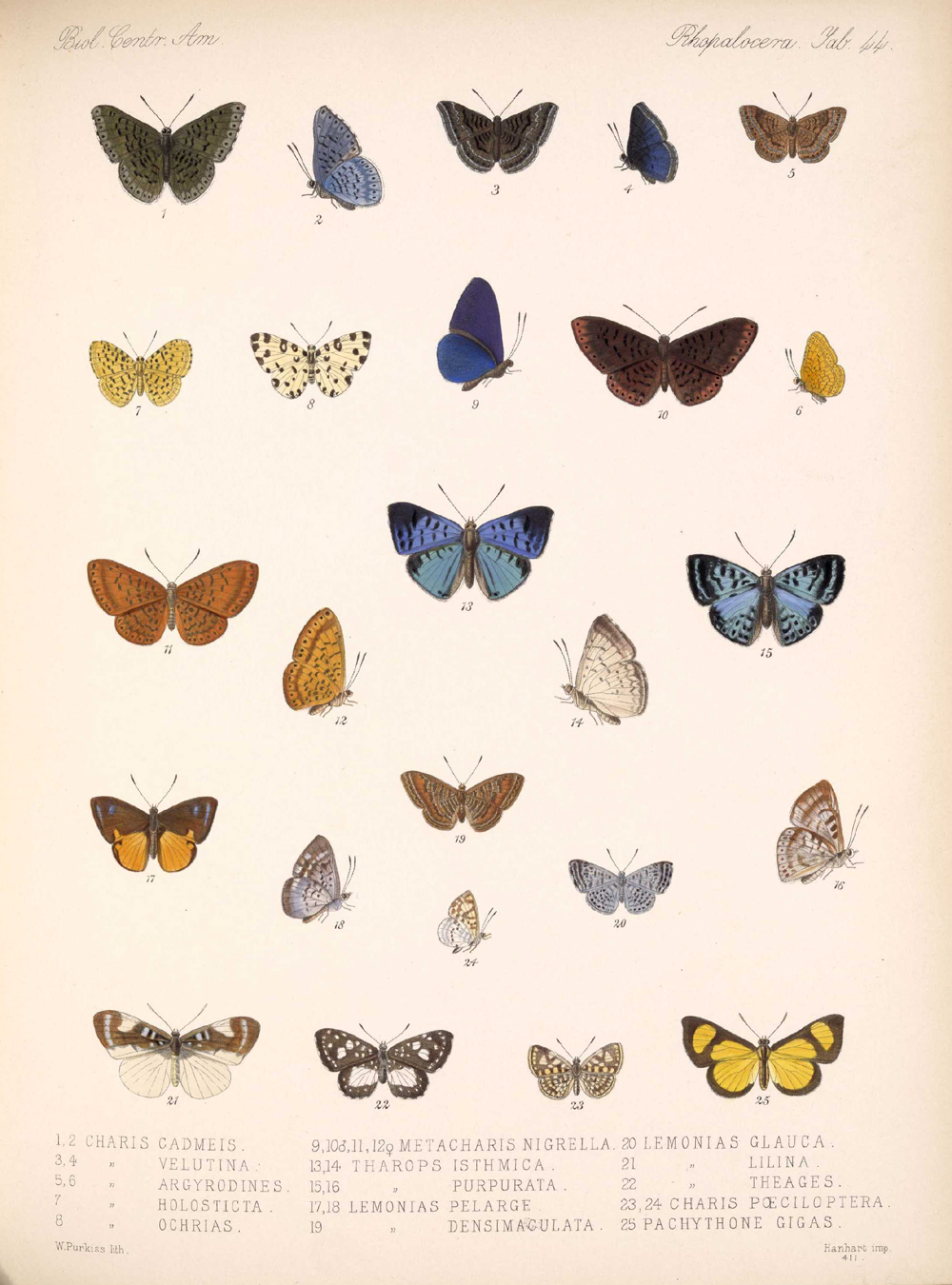 Butterflies and Moths,  Image number:bca_14_03_00_055