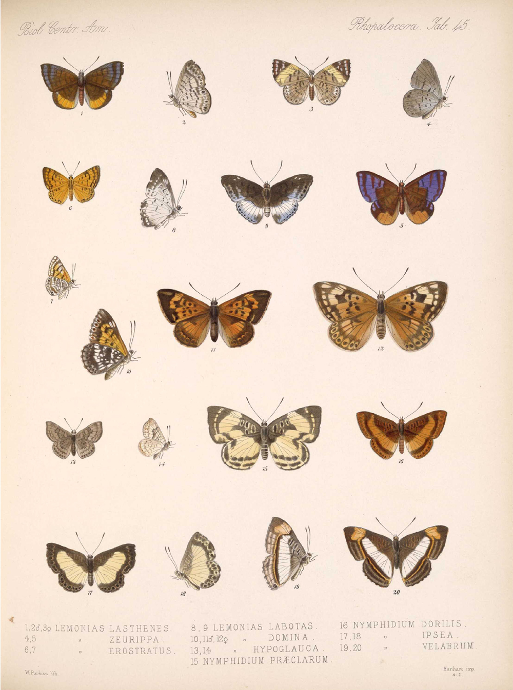 Butterflies and Moths,  Image number:bca_14_03_00_056