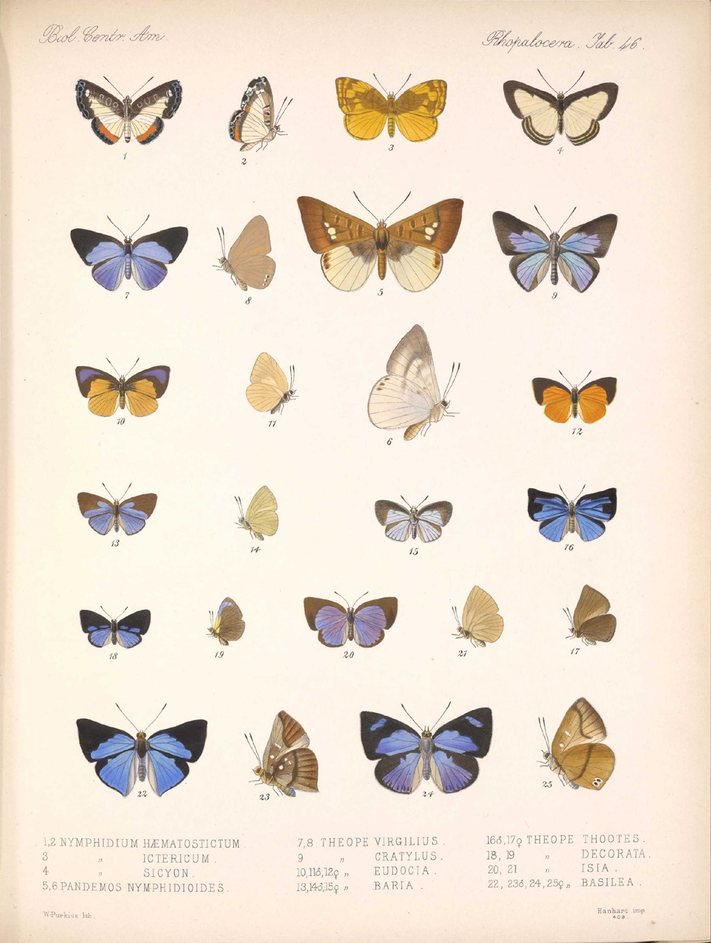 Butterflies and Moths,  Image number:bca_14_03_00_057