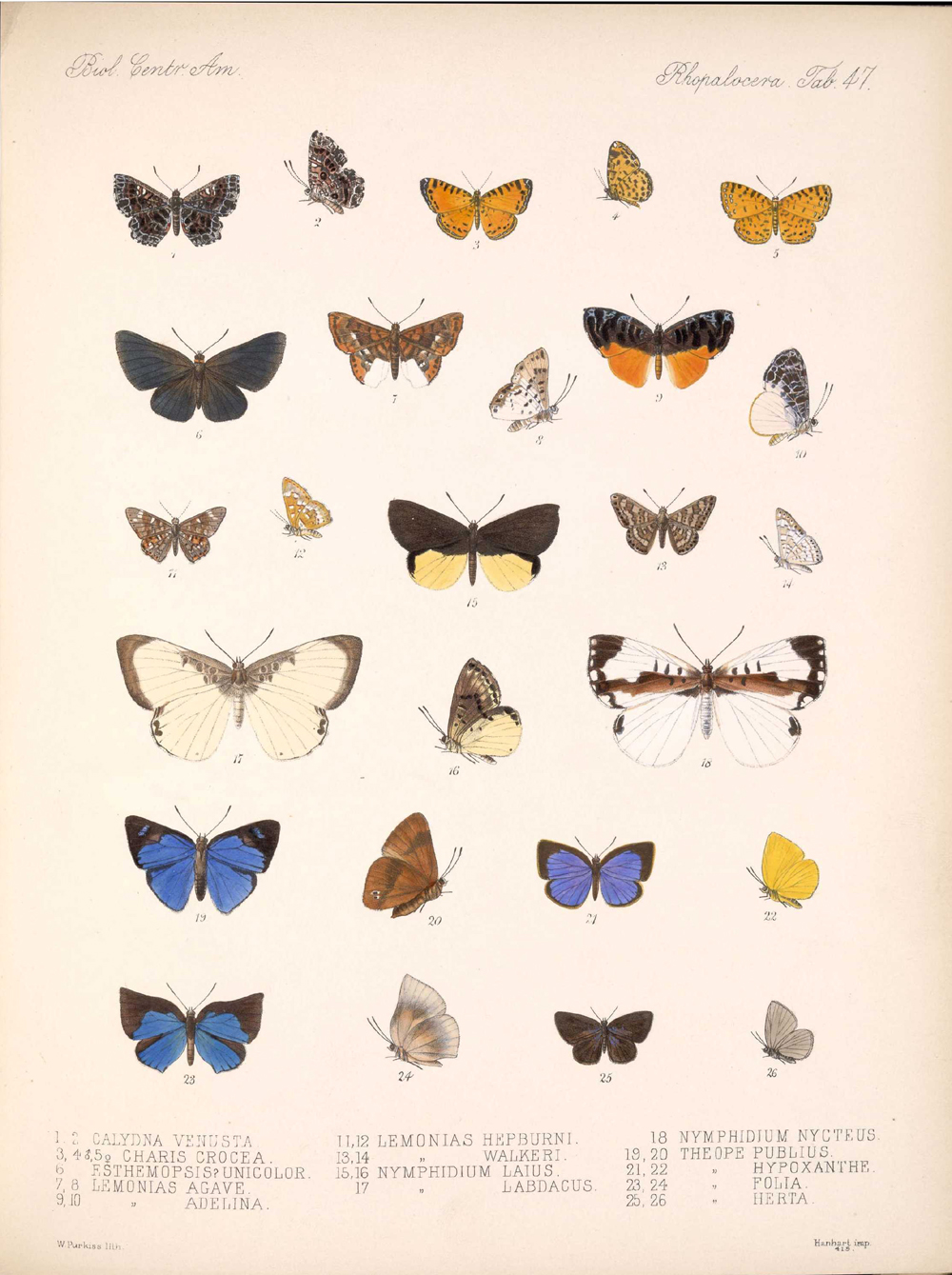 Butterflies and Moths,  Image number:bca_14_03_00_058