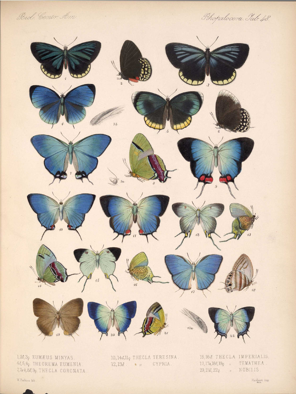 Butterflies and Moths,  Image number:bca_14_03_00_059