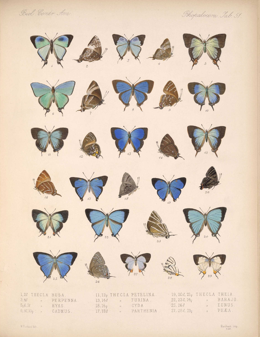 Butterflies and Moths,  Image number:bca_14_03_00_062