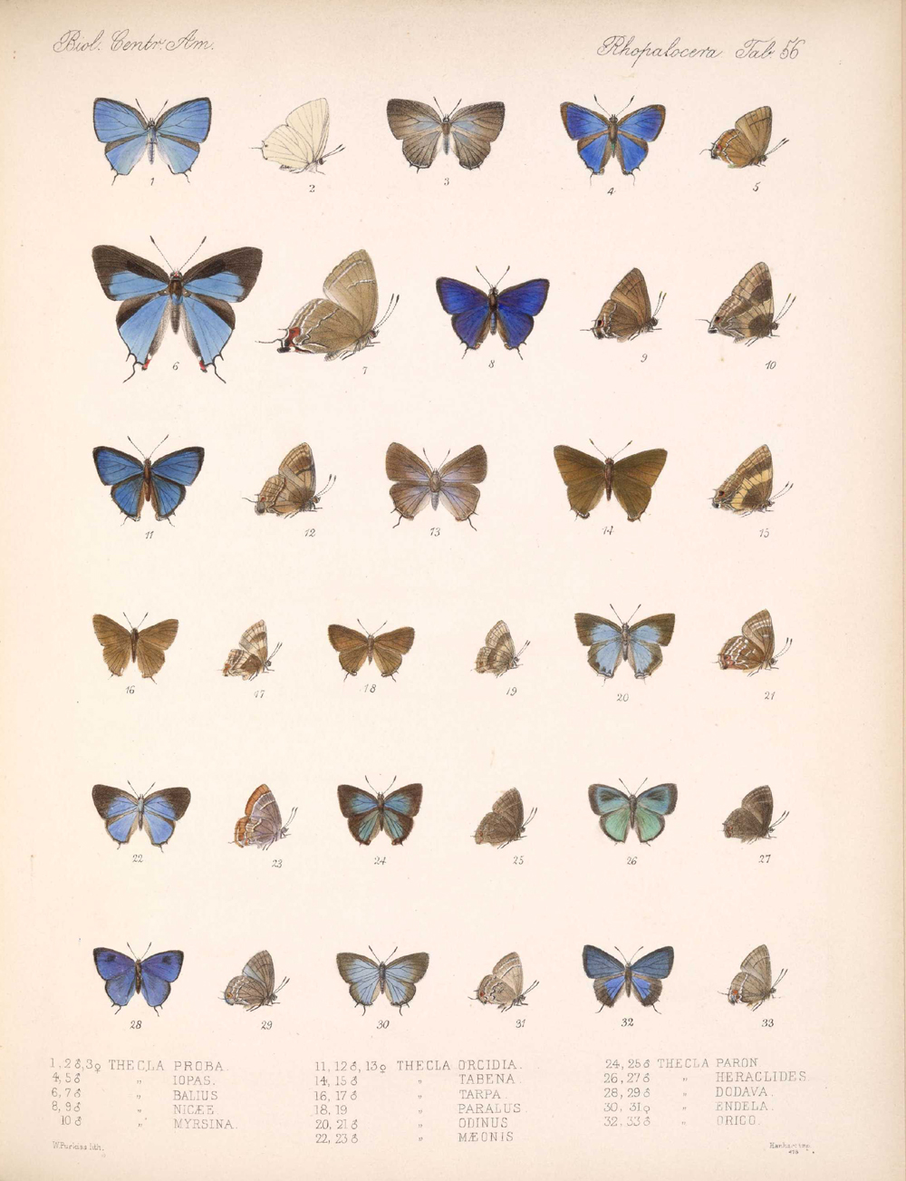 Butterflies and Moths,  Image number:bca_14_03_00_067