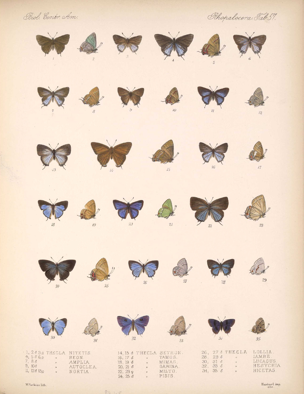 Butterflies and Moths,  Image number:bca_14_03_00_068