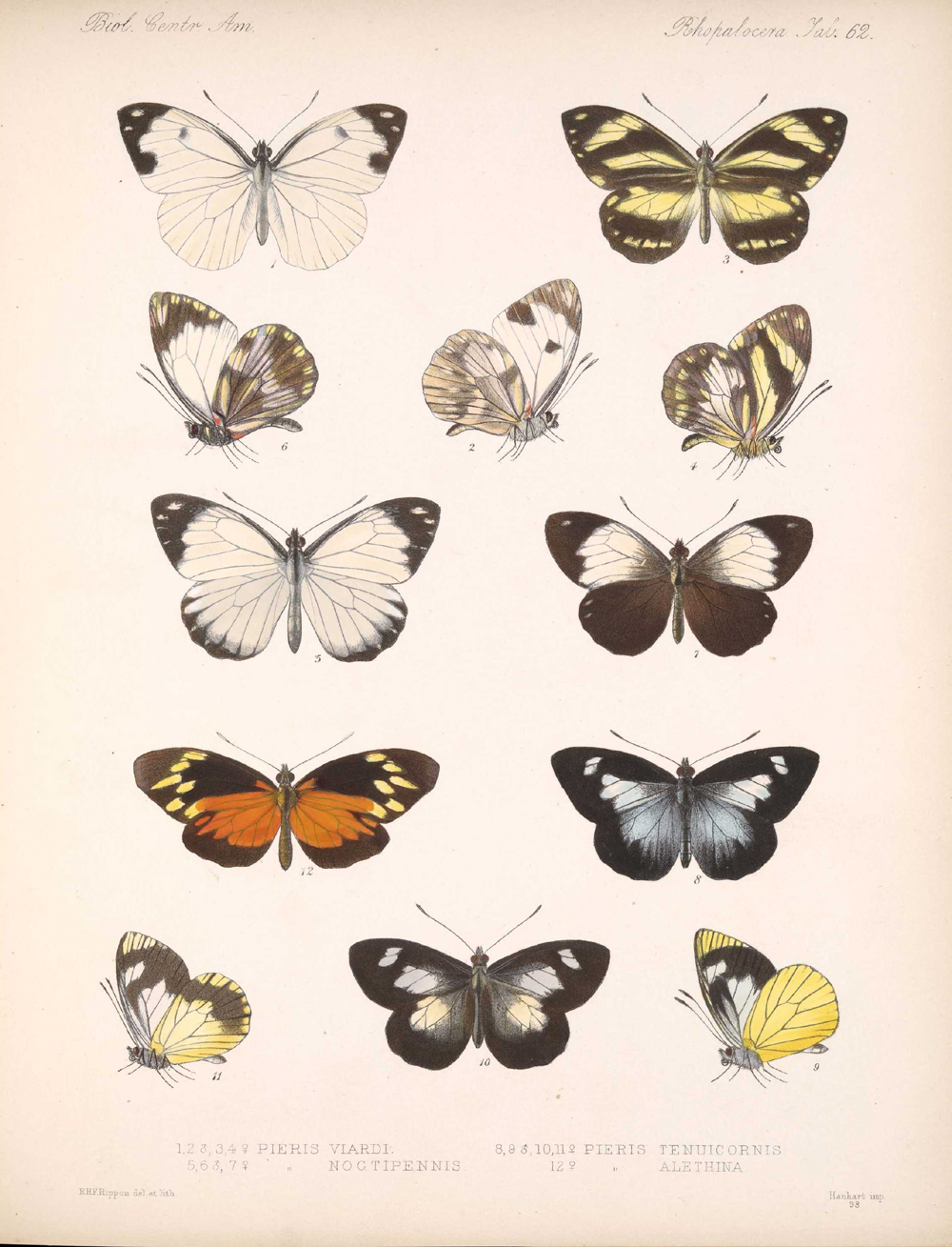 Butterflies and Moths,  Image number:bca_14_03_00_073