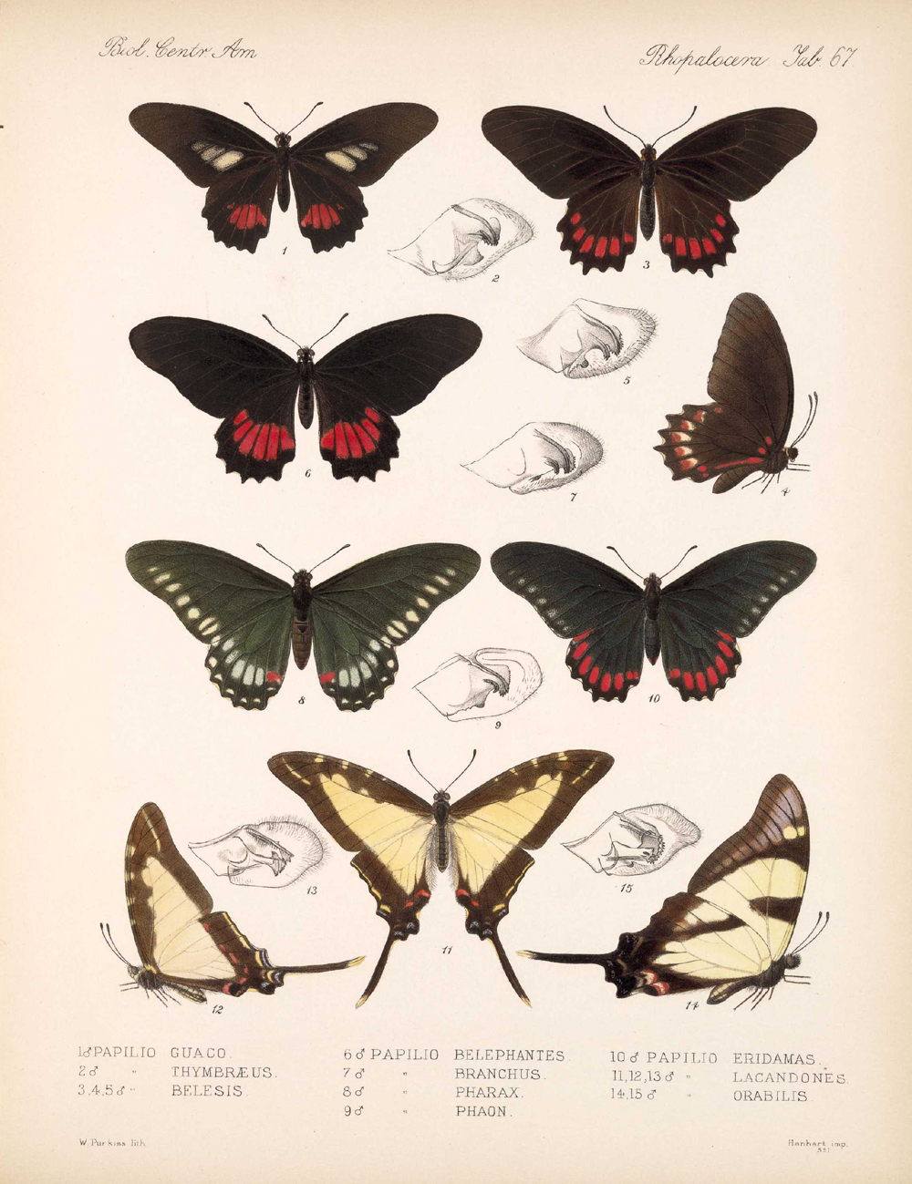 Butterflies and Moths,  Image number:bca_14_03_00_078
