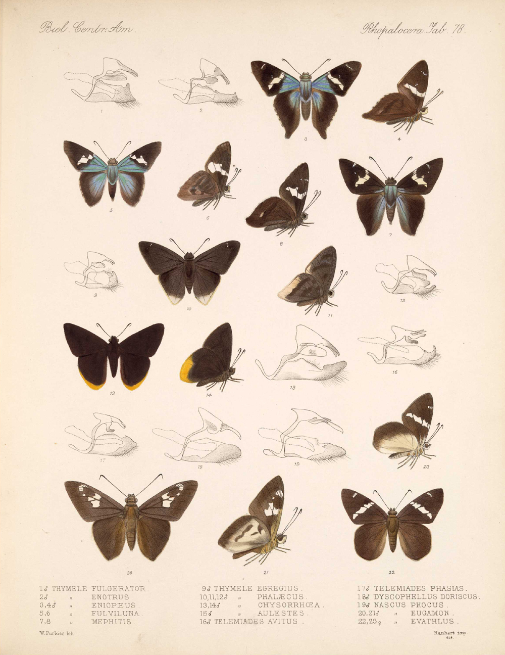 Butterflies and Moths,  Image number:bca_14_03_00_089