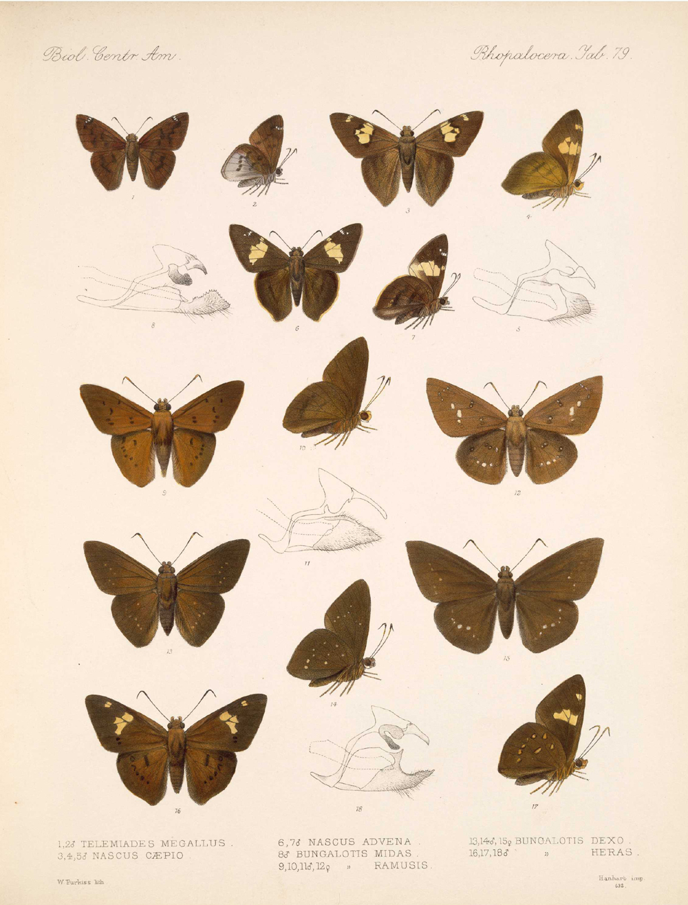 Butterflies and Moths,  Image number:bca_14_03_00_090