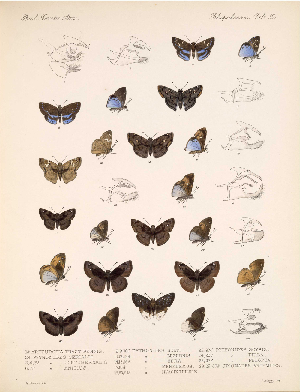 Butterflies and Moths,  Image number:bca_14_03_00_093