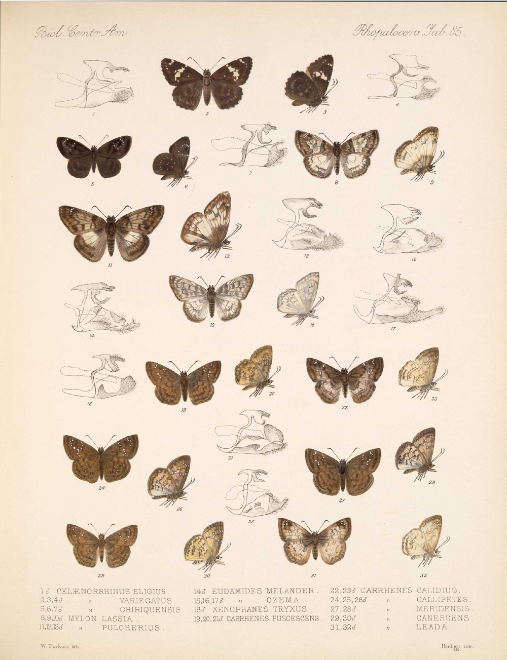 Butterflies and Moths,  Image number:bca_14_03_00_096
