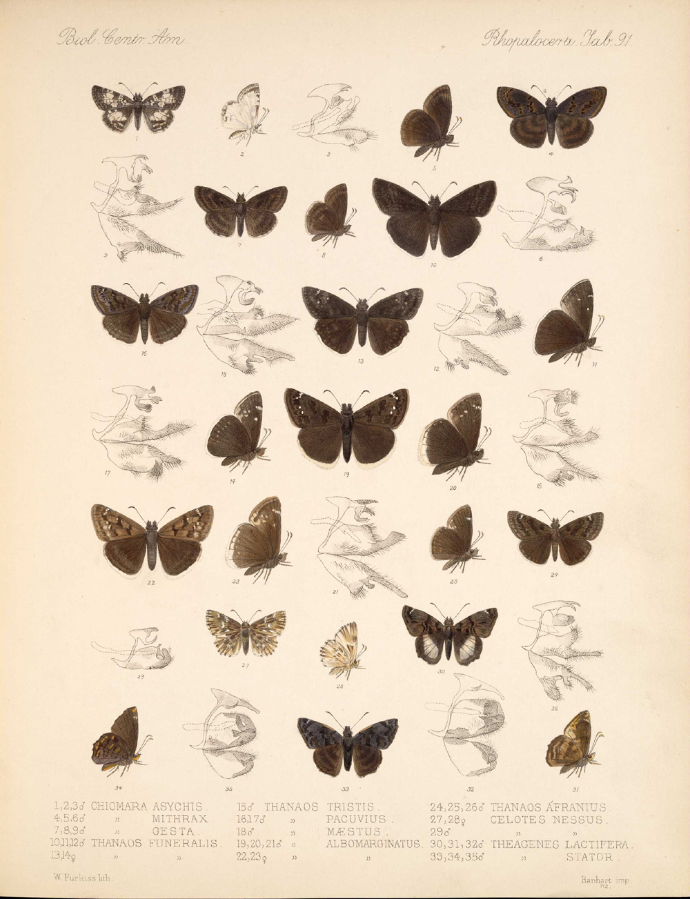 Butterflies and Moths,  Image number:bca_14_03_00_102