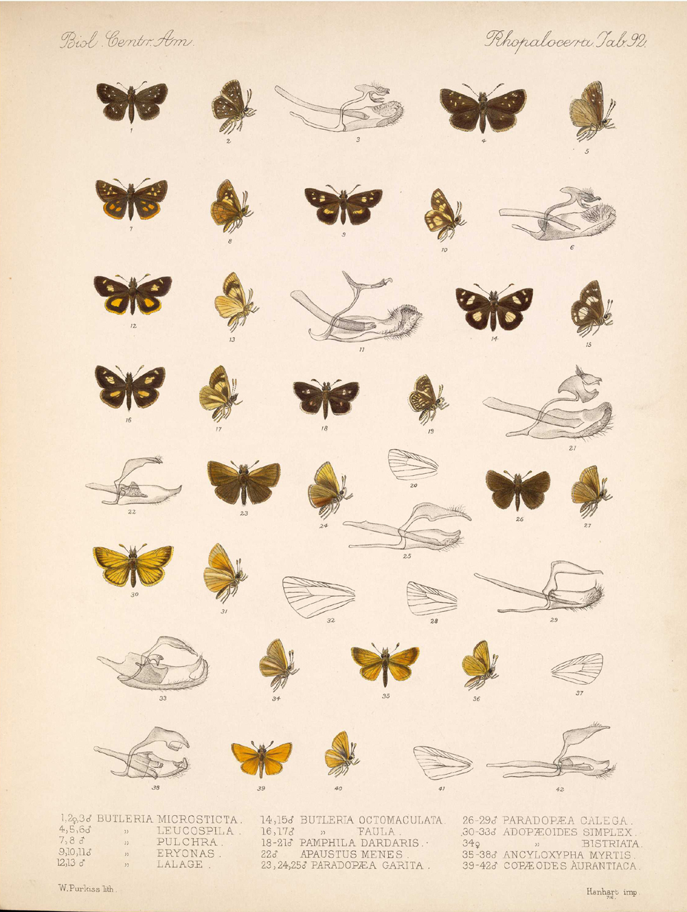 Butterflies and Moths,  Image number:bca_14_03_00_103