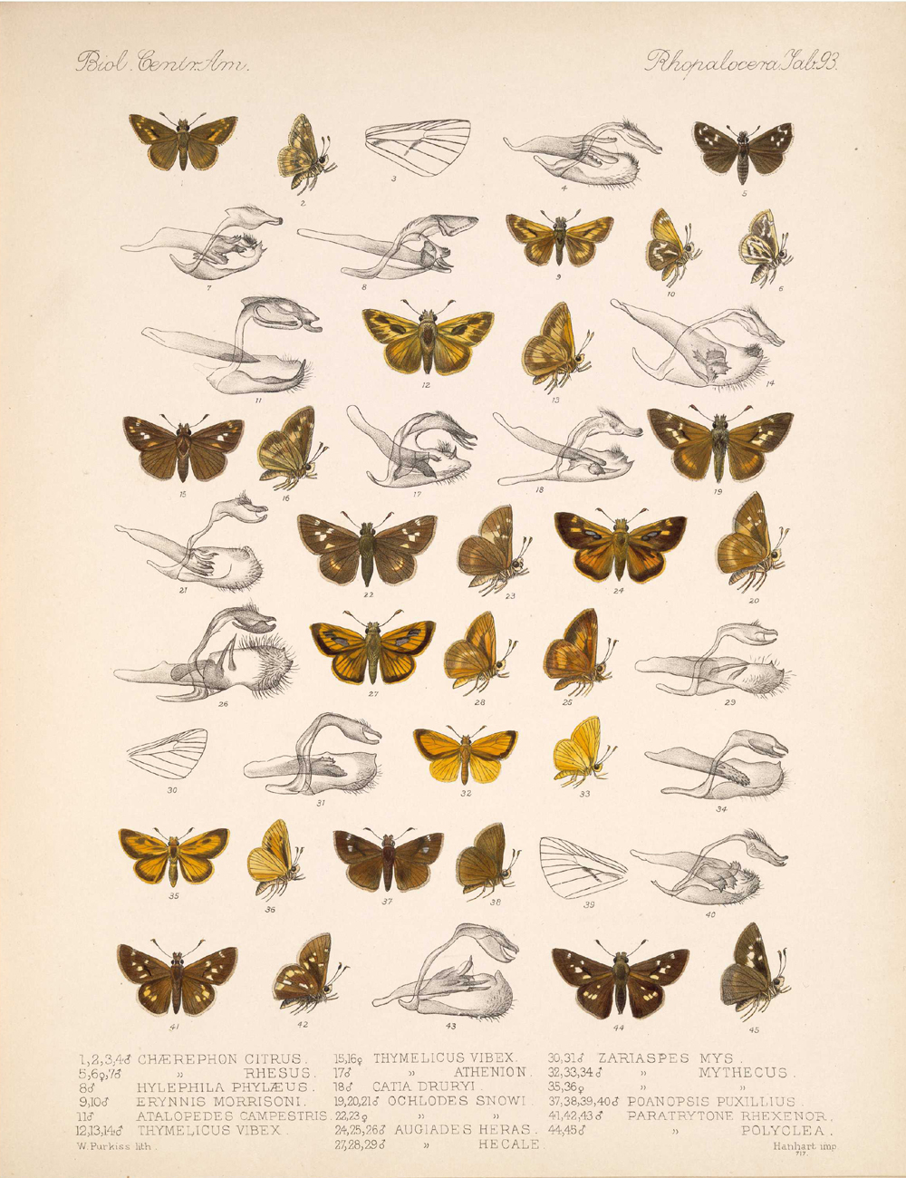 Butterflies and Moths,  Image number:bca_14_03_00_104
