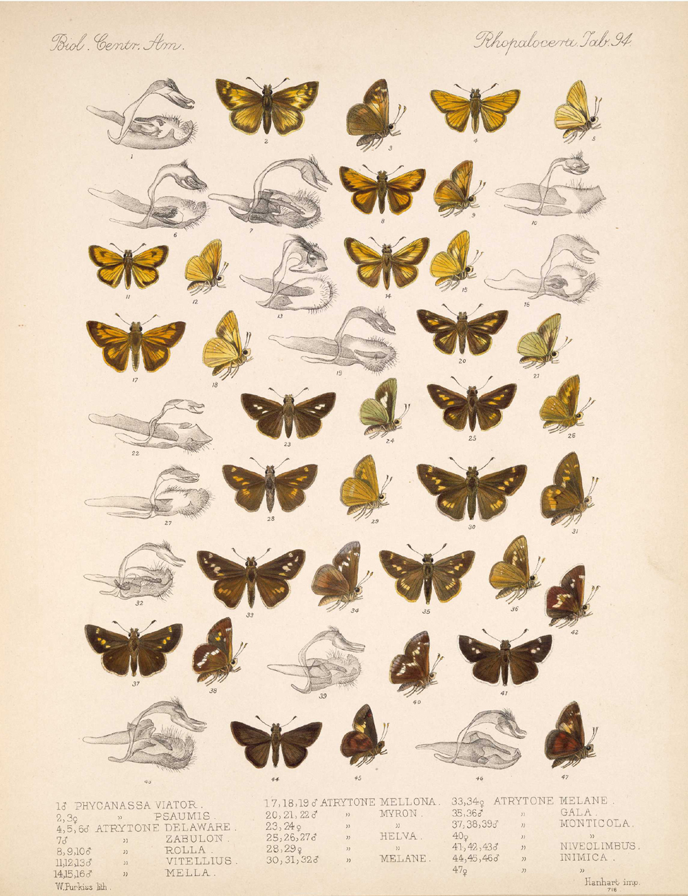 Butterflies and Moths,  Image number:bca_14_03_00_105